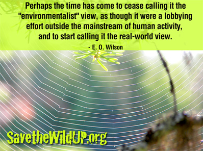 meme-quote-EOWilson