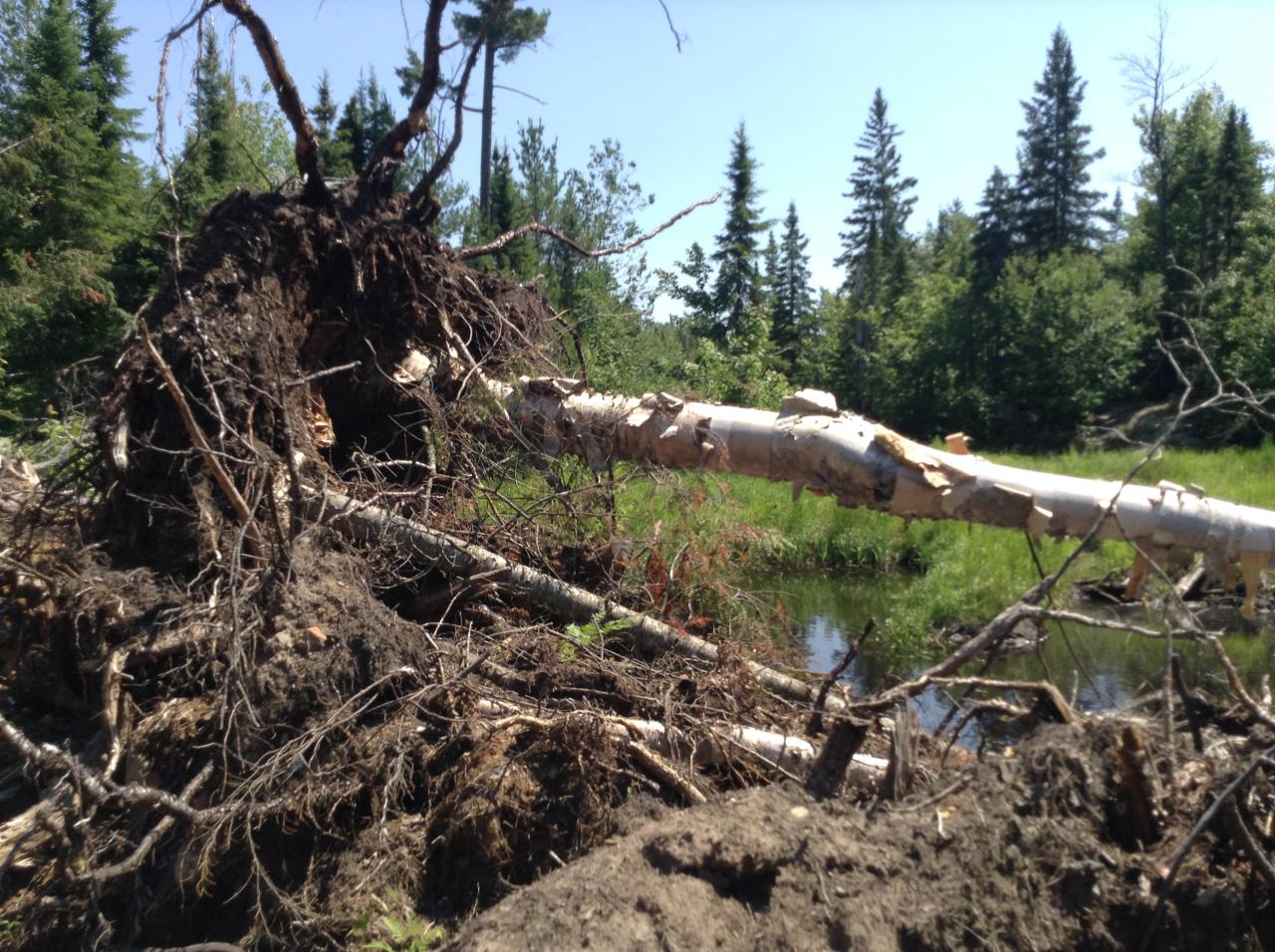 """After:  Mulligan Creek fragile wetlands were degraded by Plum Creek Timber's illegal """"road improvements"""" along the 595 route, as documented in 2014."""